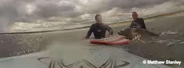 Surf con il cucciolo di foca