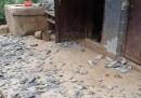 367 morti per un terremoto in Cina