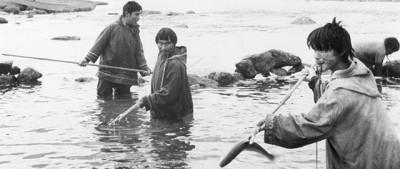 Il mito del pesce che fa bene al cuore