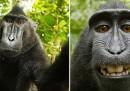 Se una scimmia fa una foto, di chi è la foto?