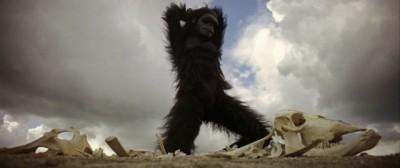 La guerra delle scimmie