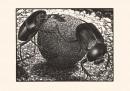Mostra Escher - 2