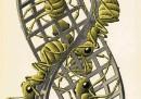 Mostra Escher - 7