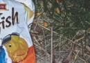 La campagna di Livegreen Toronto contro quelli che lasciano rifiuti per strada