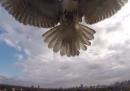 Il drone attaccato da un falco