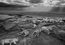 I vincitori del Wildlife Photographer of the Year