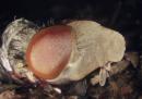 Da larva a mosca in un minuto
