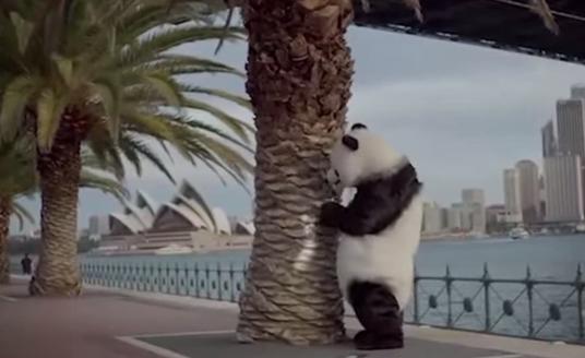 Lo spot con i panda maleducati, ritirato dalla tv cinese