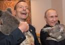 Leader coi koala