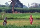Le due ragazze impiccate nell'Uttar Pradesh non furono uccise, ha detto la polizia indiana