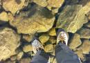 Camminata sull'acqua (ghiacciata)