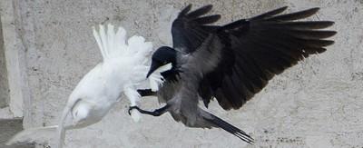 Il Vaticano passa dalle colombe ai palloncini