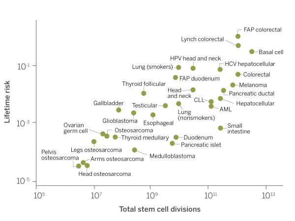 cancro-stats