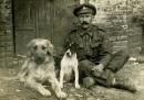 I cani della Grande guerra