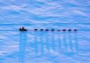 Belle foto dall'Iditarod
