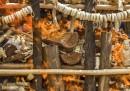 L'Etiopia ha distrutto 6 tonnellate di avorio