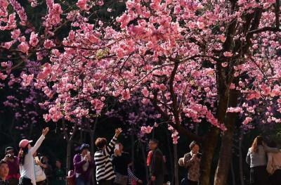 Kunming, Cina