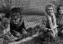 """""""Roar"""", il film più pericoloso della storia"""