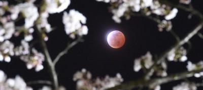 Le foto dell'eclissi lunare totale