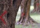 La Xylella e gli ulivi in Salento