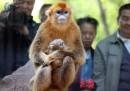 Gli animali troppo umani dei documentari