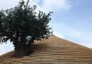 L'albero del padiglione Zero è vero?