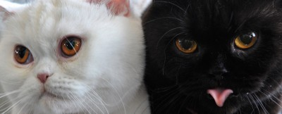 Perché i gatti hanno invaso internet