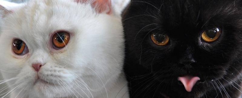 Perché I Gatti Hanno Invaso Internet Il Post
