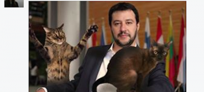 La pagina Facebook di Salvini è stata invasa di immagini di gattini