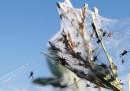 La migrazione di massa dei ragni in Australia