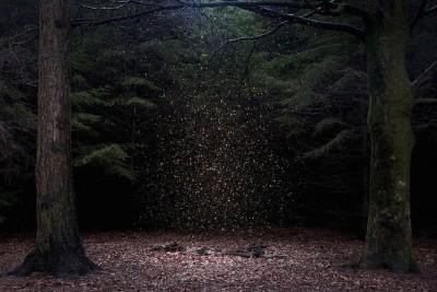 Foreste popolate di stelle