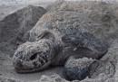 Siamo tutti sporchi di sabbia