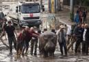 Gli animali scappati dallo zoo di Tbilisi a causa di un'alluvione