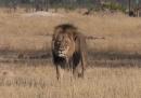 L'uccisione del leone Cecil