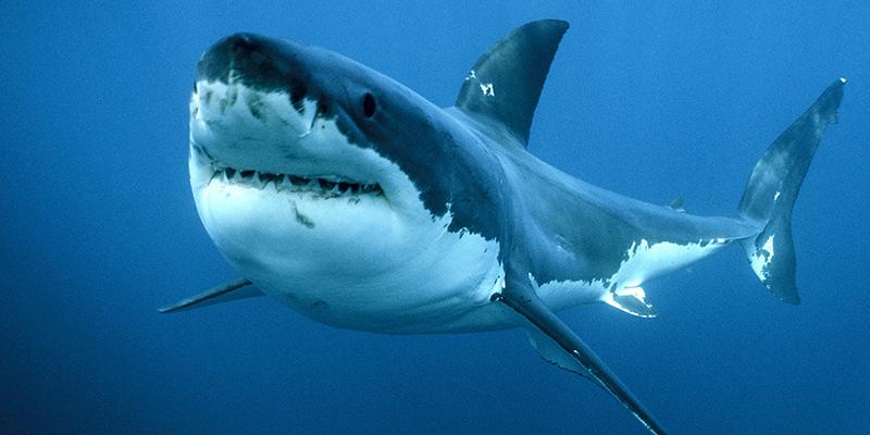 Più pesce nel mare incontri Australia