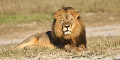 No, il fratello del leone Cecil non è morto