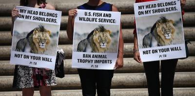 Cosa pensano in Zimbabwe del leone Cecil?