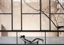 10 cose su Le Corbusier