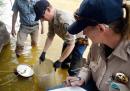 La situazione del fiume Animas in Colorado è peggiore di quanto si pensava