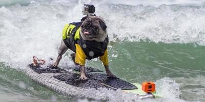 Charlie fa surf