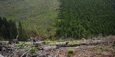 IKEA ha comprato una foresta in Romania