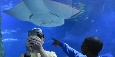 No, i selfie non uccidono più degli squali