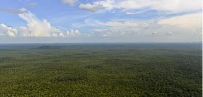 Sulla Terra ci sono più alberi di quanto pensassimo