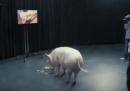 La puntata di Black Mirror che parla del primo ministro britannico e di un maiale