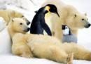 Un orso polare non ha mai visto un pinguino