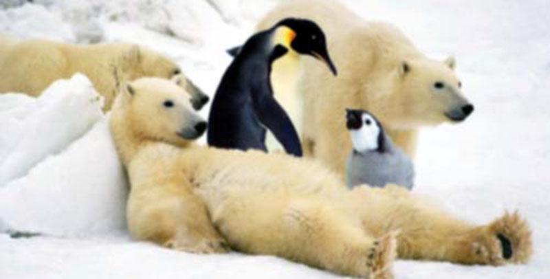 Un orso polare non ha mai visto un pinguino il post for Disegno orso per bambini