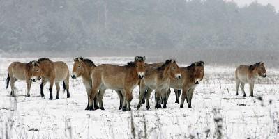 Il ritorno degli animali a Chernobyl