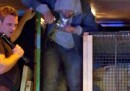 A Calais alcuni migranti si sono nascosti in un camion che trasportava un orso polare