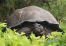 Una nuova specie di tartaruga gigante