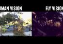Come vedono il mondo gatti, mosche, serpenti e altri animali